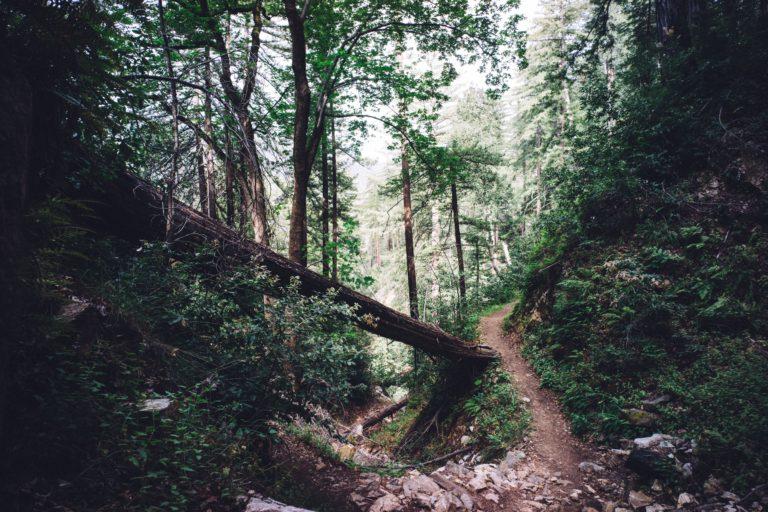 Deep River trees