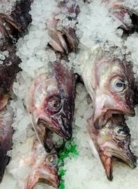 fish on ice unsplash