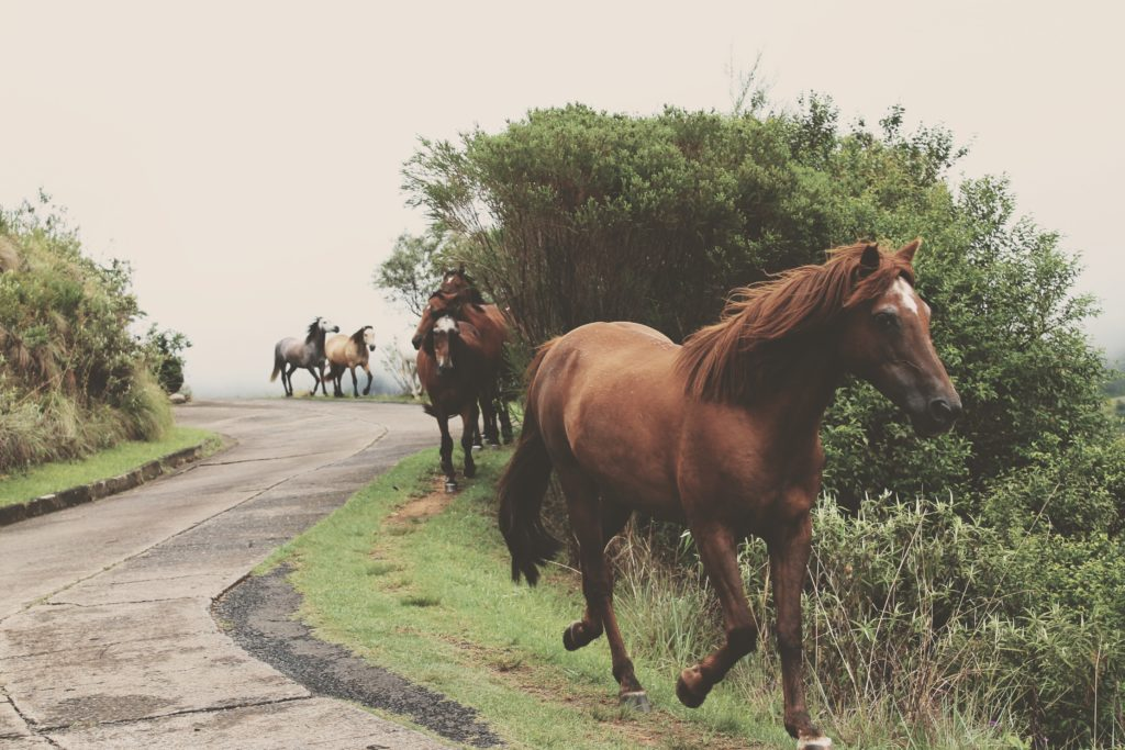 klodts horses