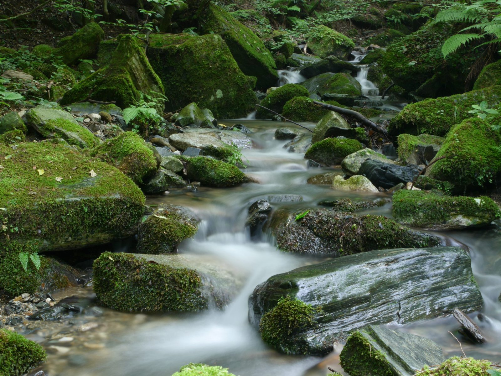 flow and overflow_mckeon
